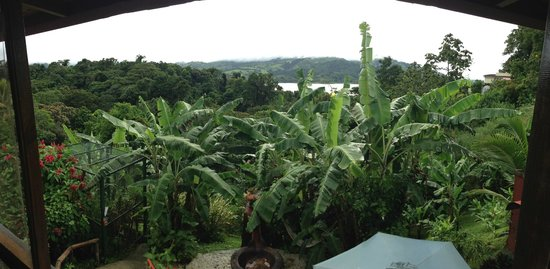 Toad Hall Hotel Arenal: View from Jungle Suite