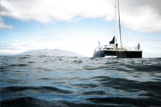 Kai Kanani Sailing Charters: 2010 Turtle Town