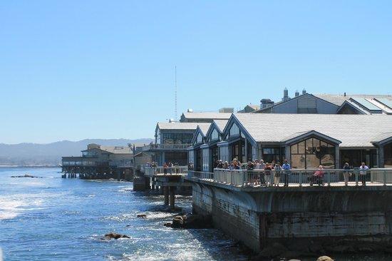 Guas Vivas Foto Di Monterey Bay Aquarium Monterey
