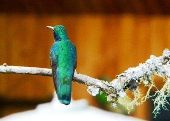 Savegre Hotel, Natural Reserve & Spa: Hummingbird at Hotel Savegre