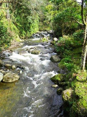 Savegre Hotel, Natural Reserve & Spa: Savegre River by Savegre Hotel