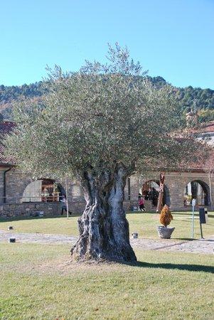 Barcelo Monasterio de Boltana : Arboles centenarios presentes en el cuidado entorno del hotel