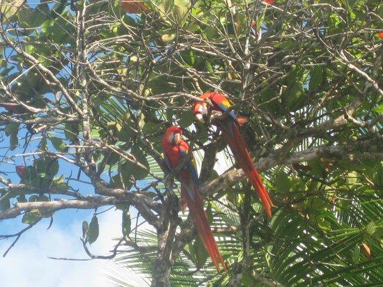 Finca Exotica Ecolodge: papagayos