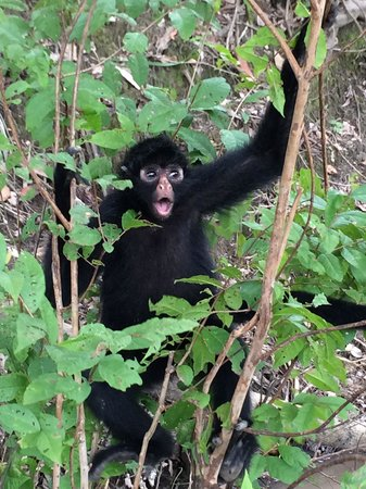 Amazon Yarapa River Lodge : Edwardo the Spider Monkey and big ham for photos
