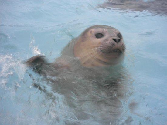 Natureland Seal Sanctuary: Seal trying to splash us