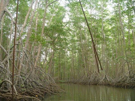 Pineapple Tours: mangrove tour