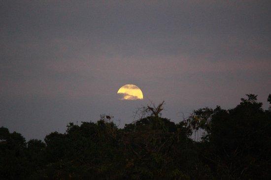 Foundation for Nature Preservation (Stinasu): Big moon setting