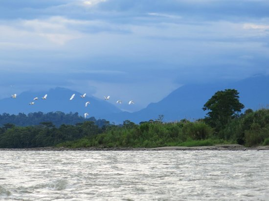 Cotococha Amazon Lodge: River trip