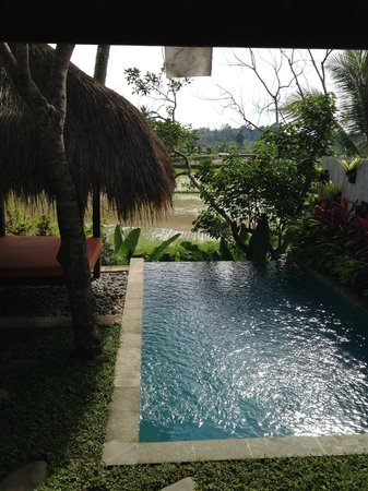 Ubud Padi Villas: Views of the paid fields from our private pool villa