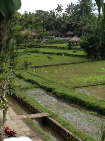 Ubud Padi Villas: Lazing by the private pool, having breakfast and enjoying the views