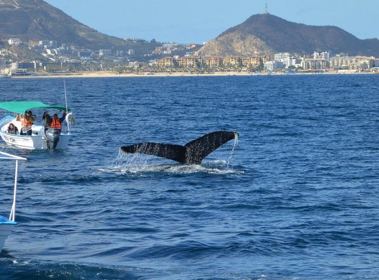 Ecocat Catamaran Tours : A whale on our tour - which was AMAZING!