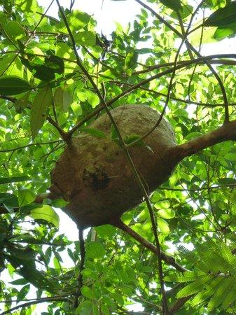 Mindu Park : Cupinzeiro de árvore