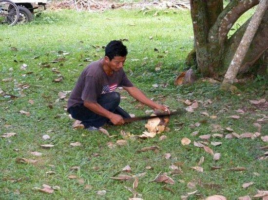 Banana Bank Lodge & Jungle Horseback Adventure: Un des employé entrain de nous couper une coco fraiche