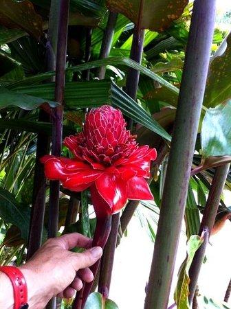 Banana Bank Lodge & Jungle Horseback Adventure: Nombreuses plantes et arbres a découvrir dans le parc