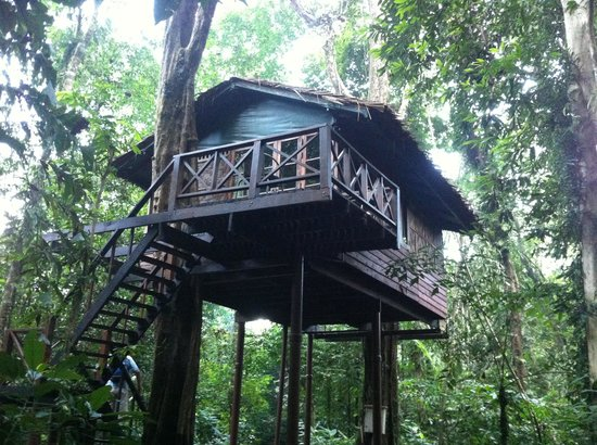 Our Jungle House: Forest Treehouse, with a queen size bed and bunks, perfect for our family of 4.