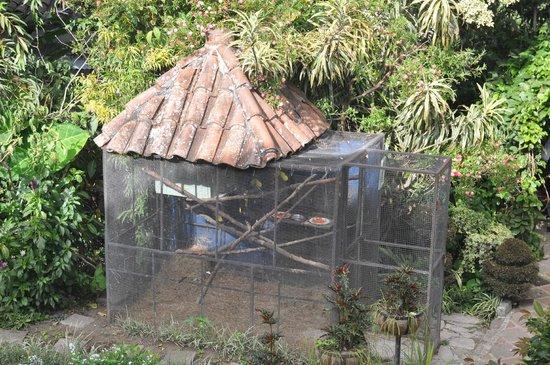 Hotel Atitlan: Tucan cage