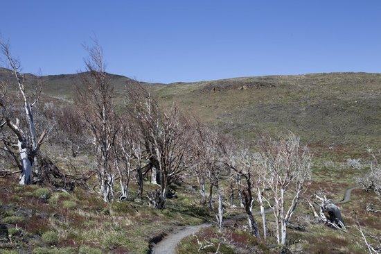 Lago Nordenskjold: Trekking per Mirador Cuernos