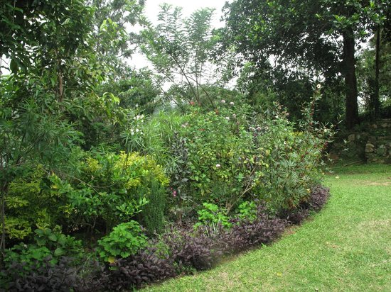 Amba Estate Farmstay: Garden