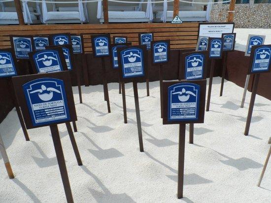 Hyatt Zilara Cancun: nido tortugas