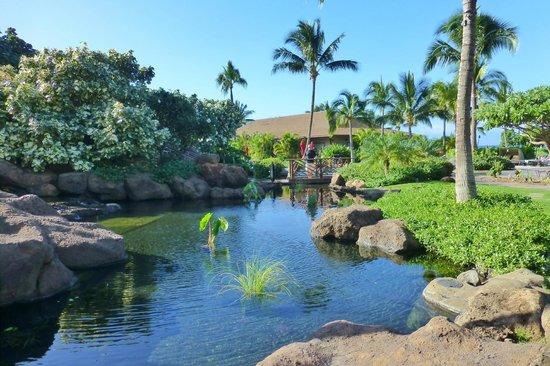 Honua Kai Resort & Spa : Koi pond looking towards Duke's Restaurant