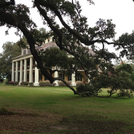 Houmas House Plantation and Gardens: 300 year old live oaks