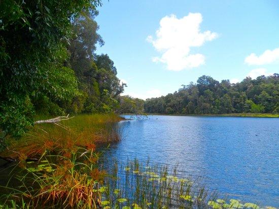 Lake Barrine Rainforest Cruise and Teahouse: Beautiful :)