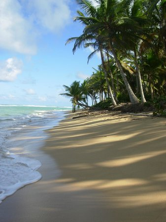 Excellence Punta Cana: Walking along the beach to the right of the resort.