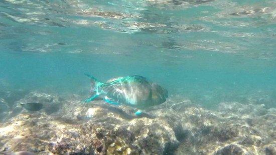 Hanauma Bay Nature Preserve: Not sure of the fish, but beautiful.