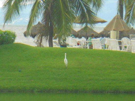 The Grand Mayan Nuevo Vallarta: Across the lagoon