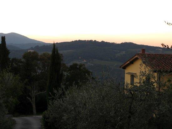 Agriturismo Poggio al Sole: some of the olive trees in front of the farmhouse at Poggio al Sole