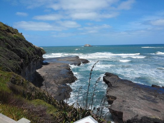 Muriwai Gannet Colony: view