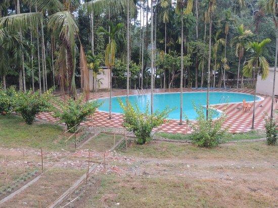 Infinity Resort Kaziranga: The Pool