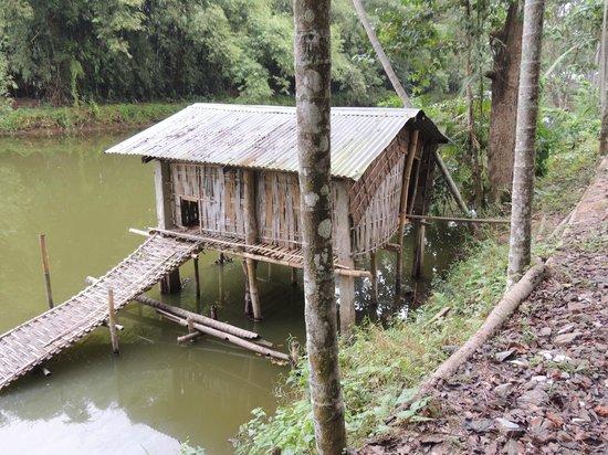 Infinity Resort Kaziranga: The duck house