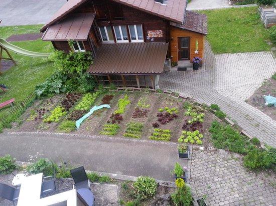 Hotel Bären: Salad garden