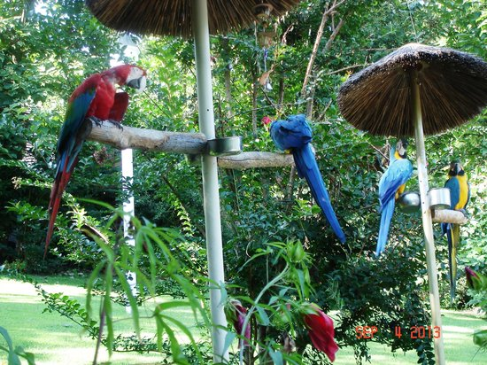 Parrot Mountain & Gardens: Just hanging out