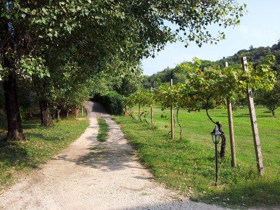 La Camaldola B&B: Garten Eden