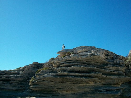 Parakeet Bay: stalking the sea eagle