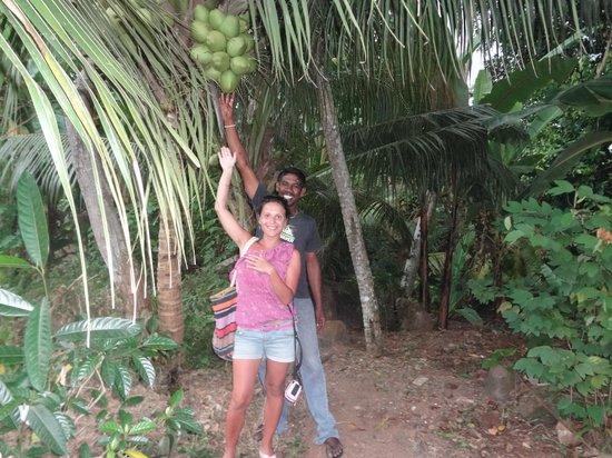 Heritance Ahungalla: повсюду растут кокосы....