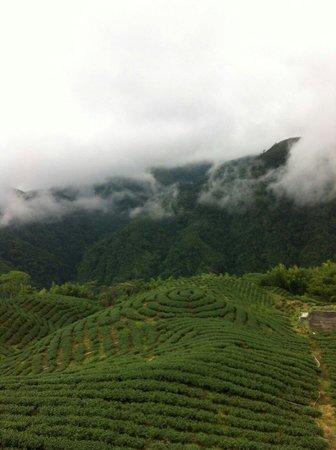 八卦茶圆-雍富休闲茶庄