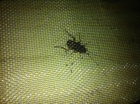 Moonwalk lanta resort ko lanta thailand omdomen och for One cockroach in bathroom