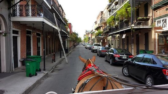 Royal Carriages: Our view over the mule !!