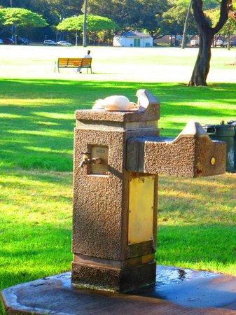 Kapiolani Park: 鳥が水飲み中