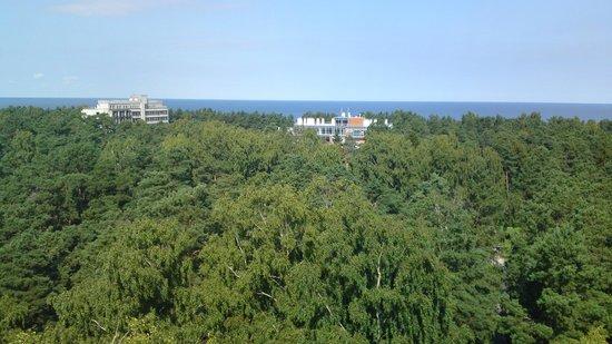 Dzintari Forest Park: Вид с верхней площадки башни