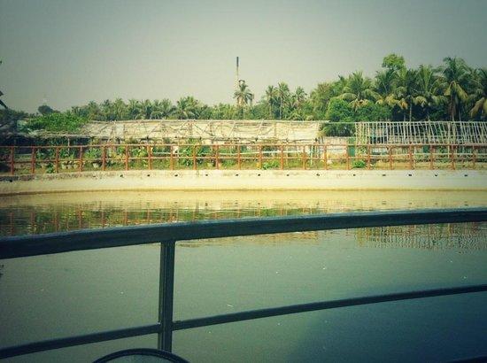 A rear view of a swimming pool at Nirala resort..