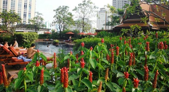 Plaza Athenee Bangkok, A Royal Meridien Hotel: Torch Ginger and Pool