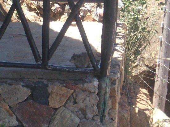 Zomeni Lion Hill Lodge: seitlicher Zimmeraussicht