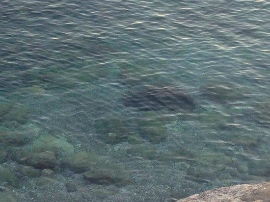 Lloyd's Baia Hotel: Il mare!