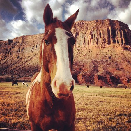 Red Cliffs Lodge: Horse