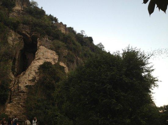 Battambang Bat Caves : The Cave and Bats