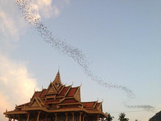Battambang Bat Caves : The Temple and Bats